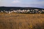 Ovce pred gradom (Gordan Topić Nia)