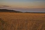 Večer u polju (Gordan Topić Nia)